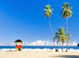 Beach with hut and palm trees