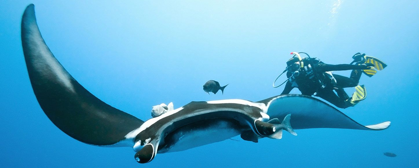 Scuba diving with Manta Rays in Indonesia